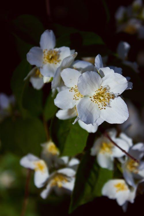 Foto d'estoc gratuïta de 50 mm, flor, floració, macro