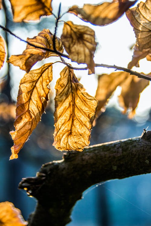 Free stock photo of 50mm, autumn, colors of autumn, dry