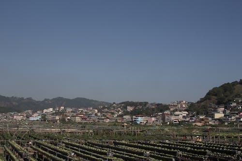 Foto d'estoc gratuïta de arbres, baguio, blau, cel