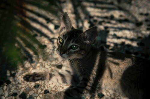 Free stock photo of animal, animal photography, beautiful eyes, blur