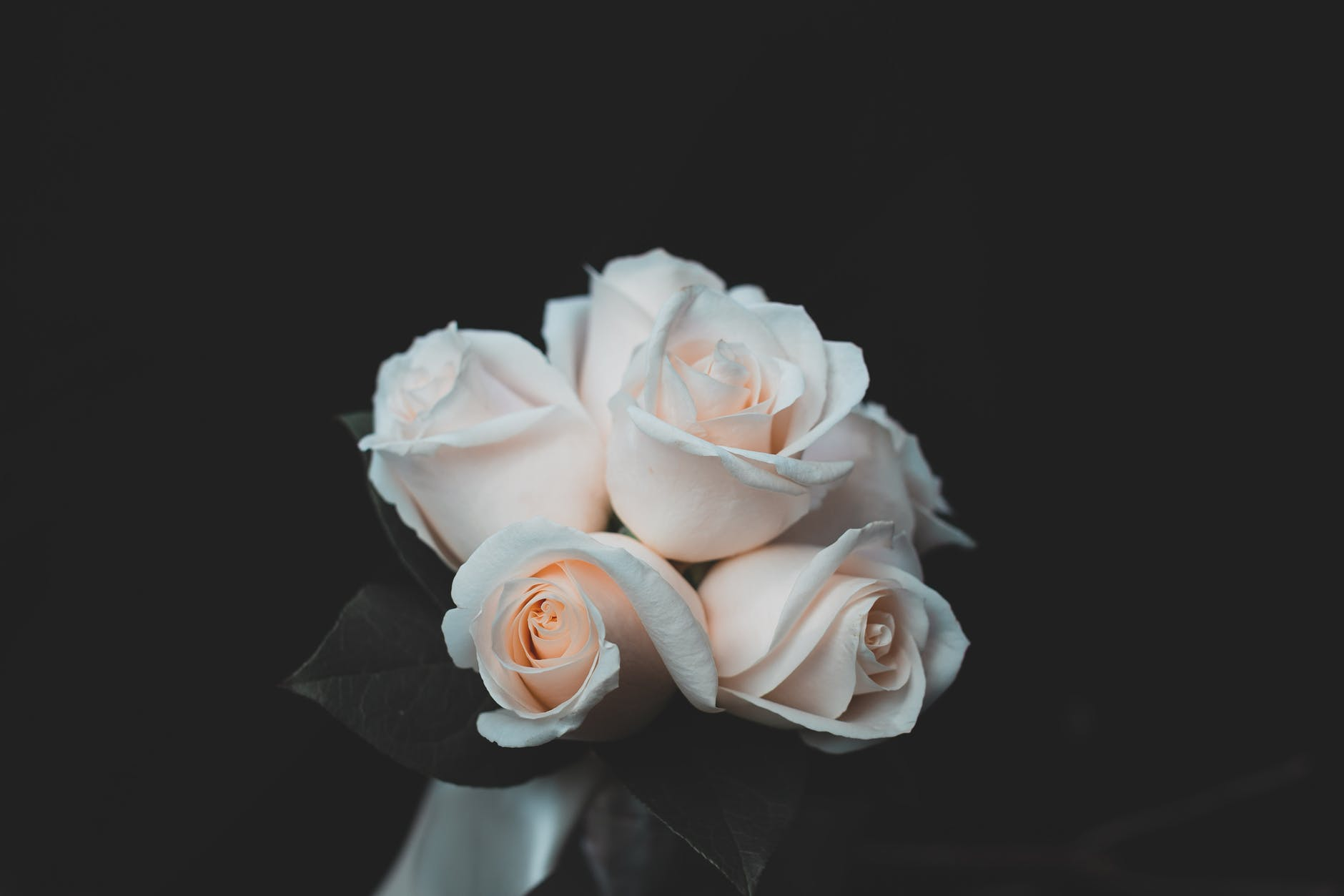 gambar bunga mawar hitam putih yang cantik