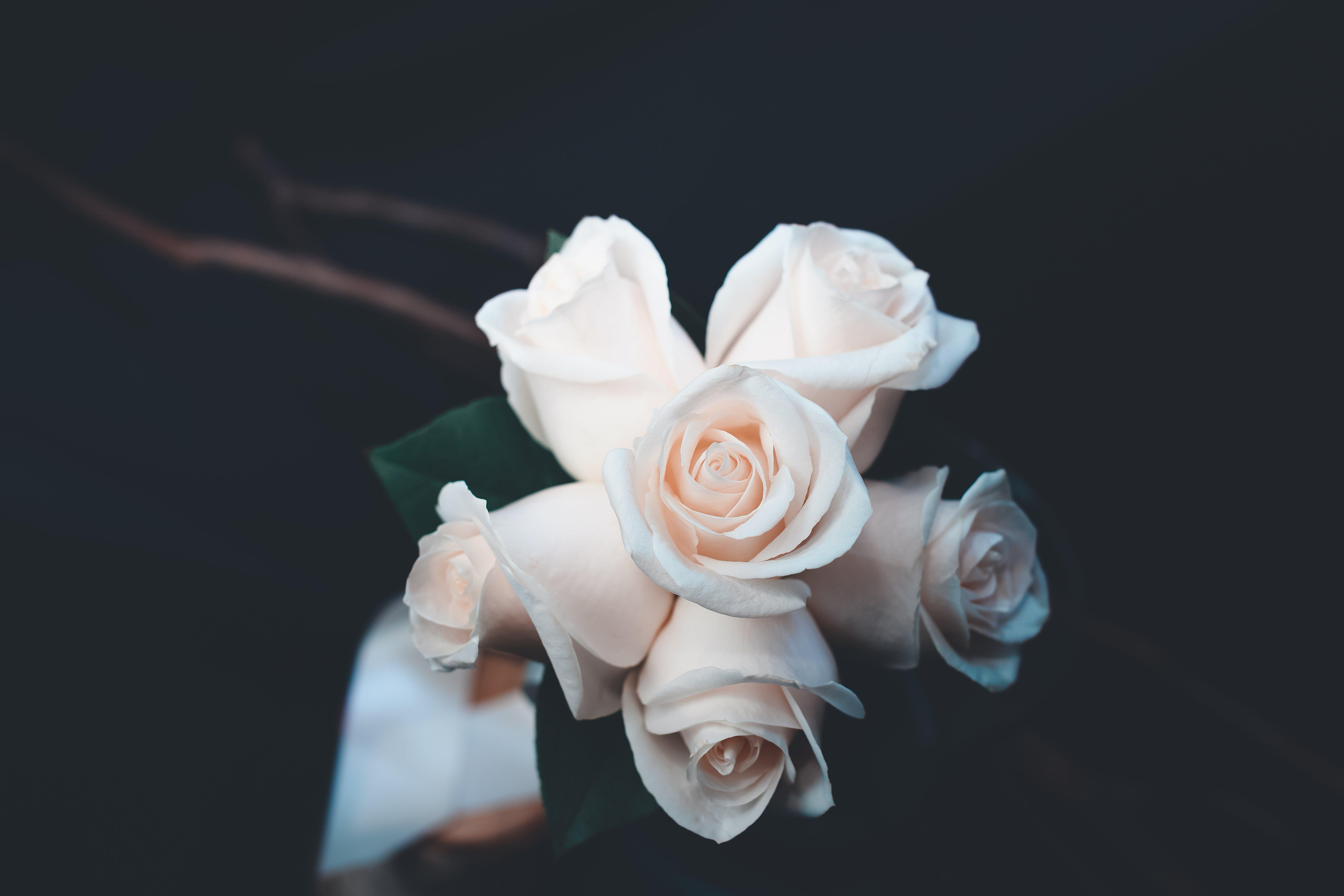 Δωρεάν στοκ φωτογραφιών με ανθισμένος, γαμήλιο μπουκέτο, διακόσμηση, λουλούδια
