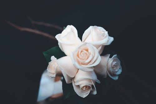Δωρεάν στοκ φωτογραφιών με ανθίζω, γαμήλιο μπουκέτο, διακόσμηση, λουλούδια