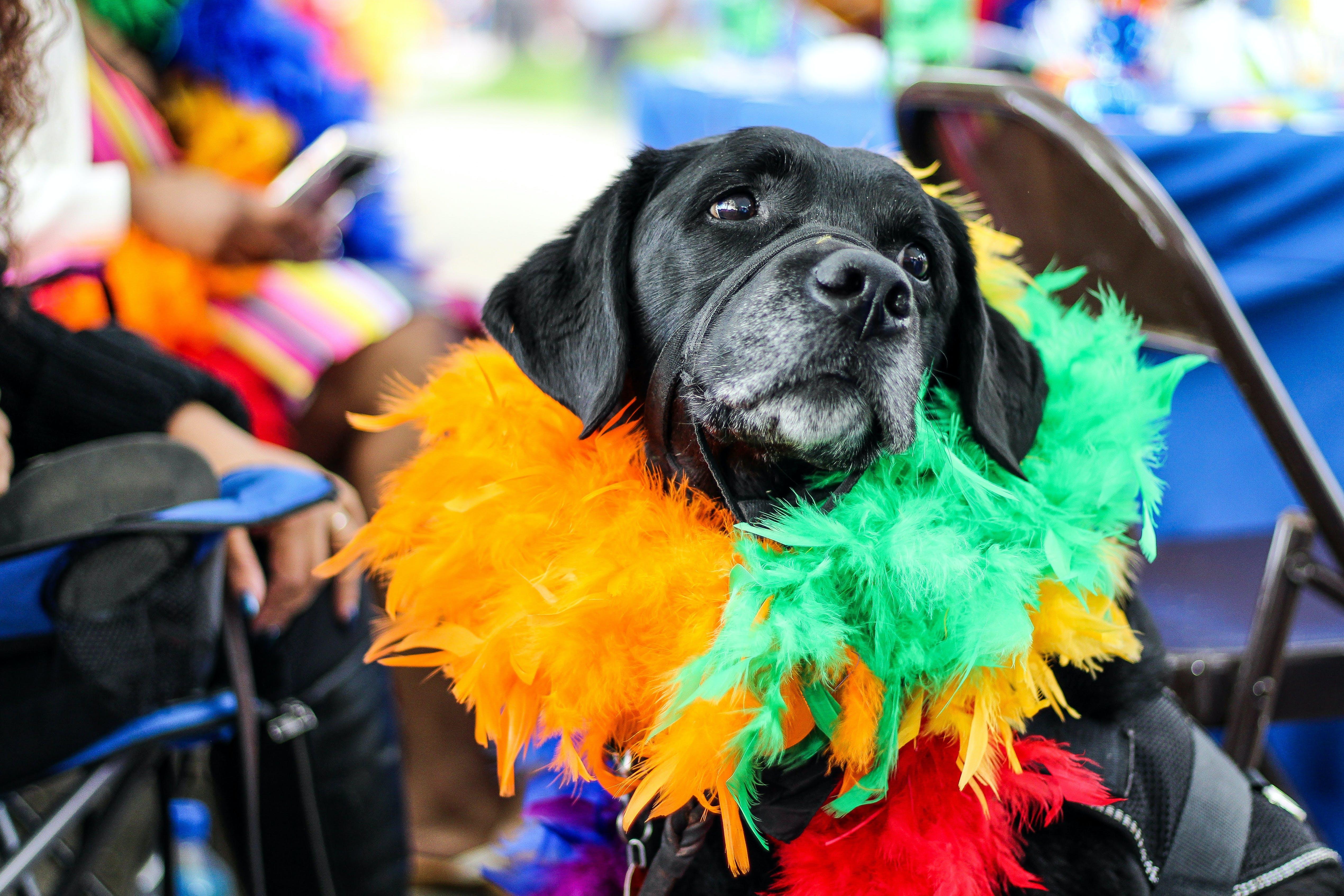 Fotos de stock gratuitas de actuación, animal, arco iris, calle