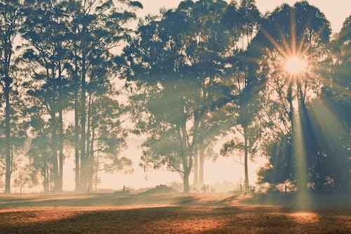 Gratis lagerfoto af eukalyptræer, eukalyptus, gård, karri træer