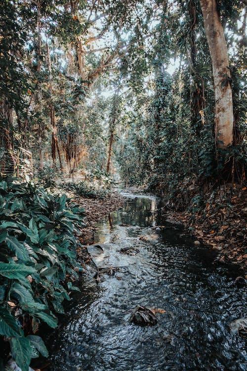 Ingyenes stockfotó áramló, fák, folyam, folyó témában
