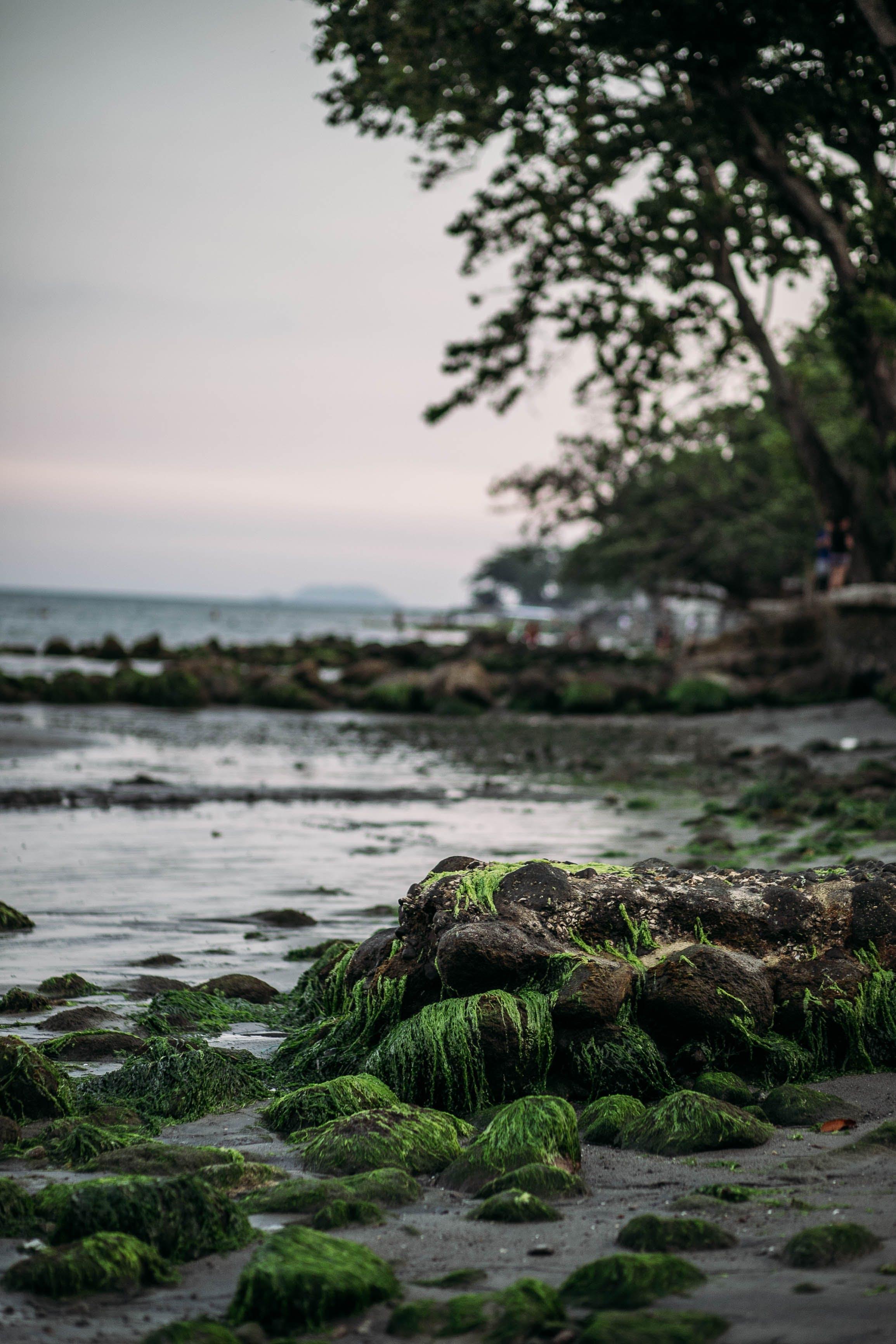Gratis lagerfoto af grøn, strand