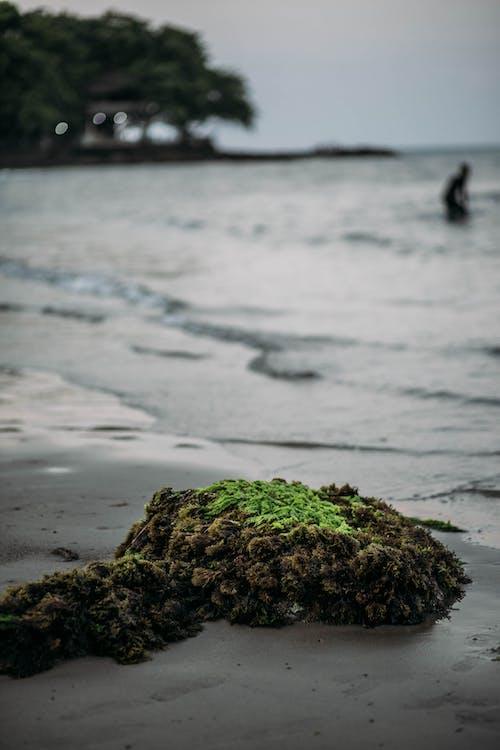 Základová fotografie zdarma na téma pláž, zelená