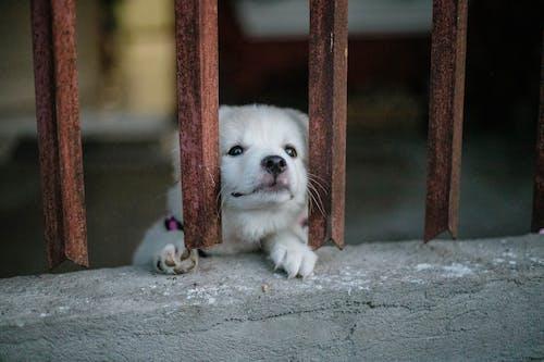 Kostnadsfri bild av bur, däggdjur, förtjusande, hund