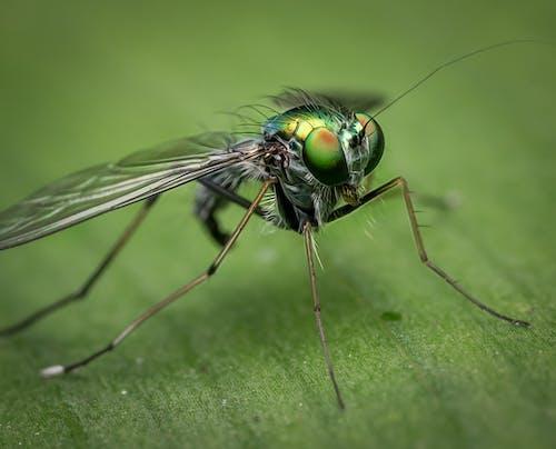 Fotobanka sbezplatnými fotkami na tému biológia, chlpatý, chrobák, detail