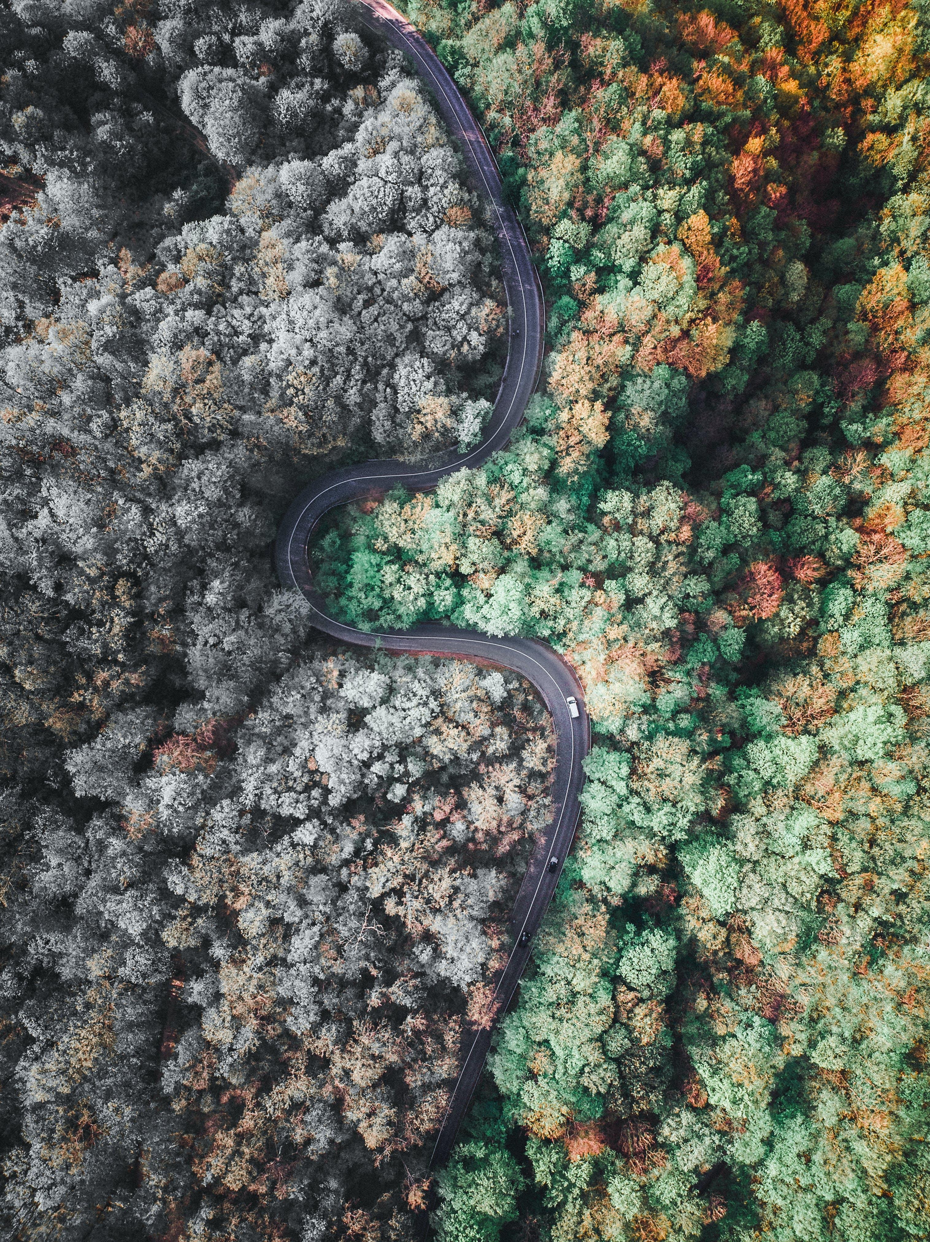 Δωρεάν στοκ φωτογραφιών με αεροφωτογράφιση, δέντρα, δρόμος, εναέρια λήψη