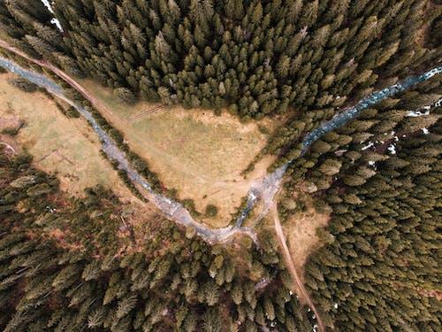 Water Between Pine Trees