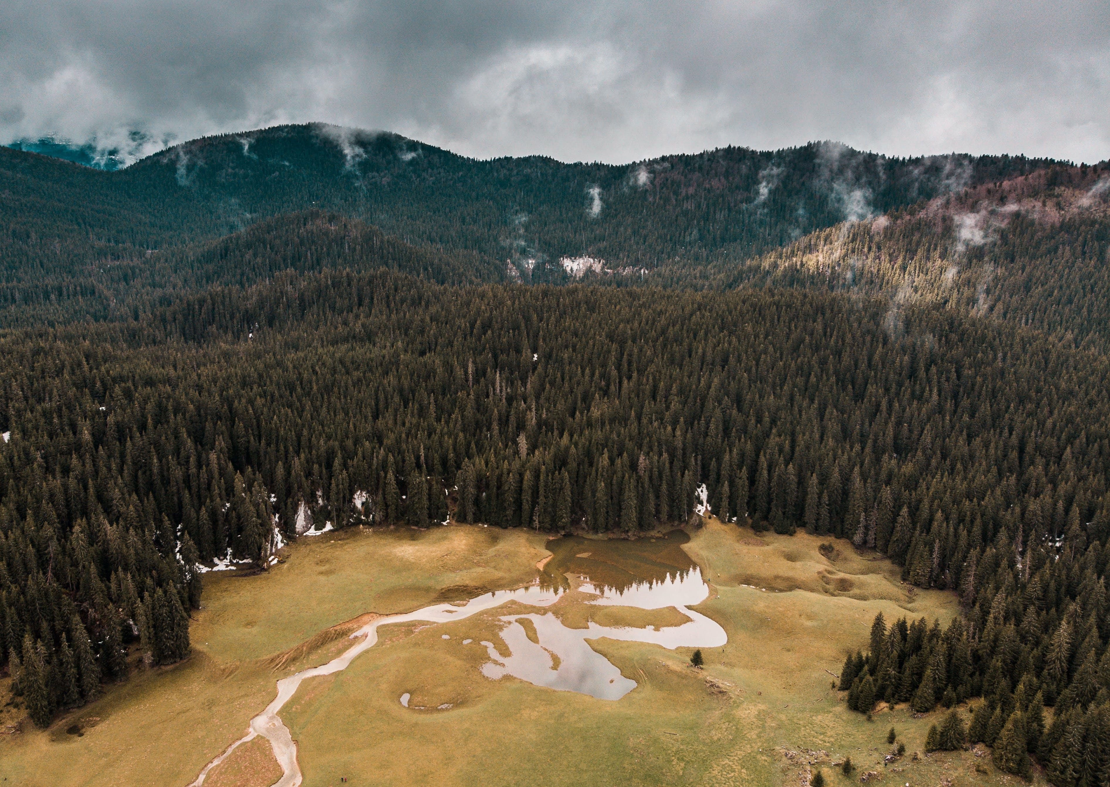 Δωρεάν στοκ φωτογραφιών με αειθαλής, αυγή, βουνά, βουνό
