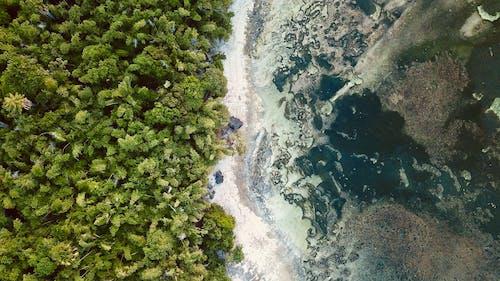 Foto profissional grátis de aerofotografia, água, ao ar livre, árvores