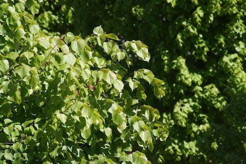 Δωρεάν στοκ φωτογραφιών με εμφανίσιμος, καλοκαίρι, ουάου, πράσινος