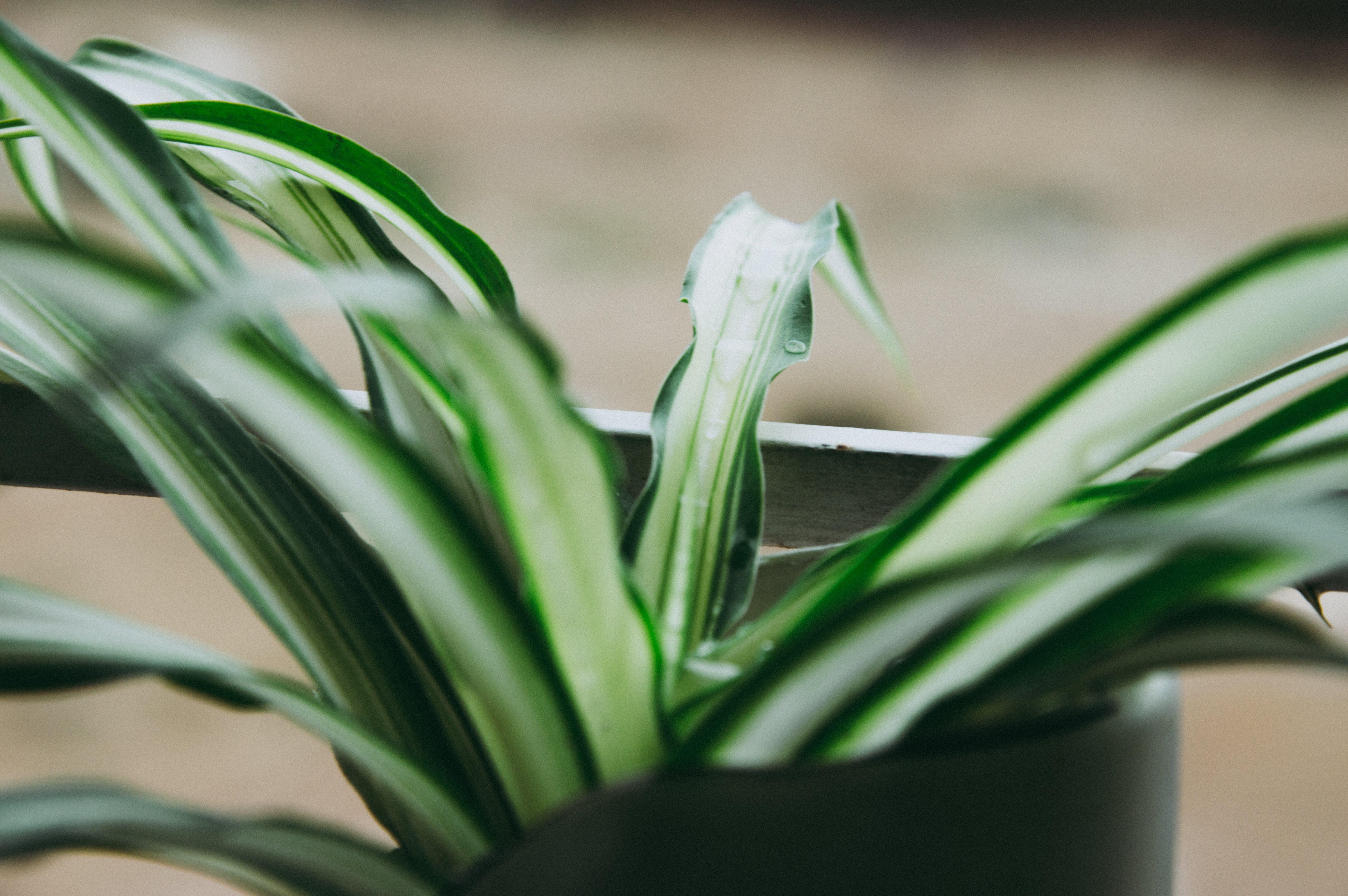 宏觀, 工厂, 盆栽, 綠色植物 的 免费素材照片