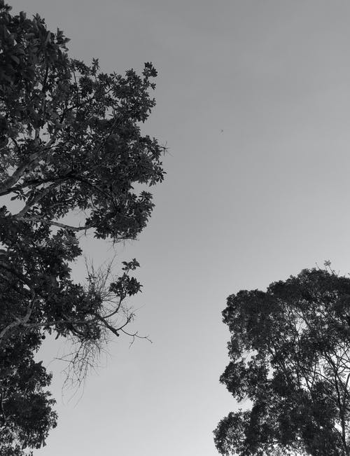 Free stock photo of black and white tree, ees, monochrome