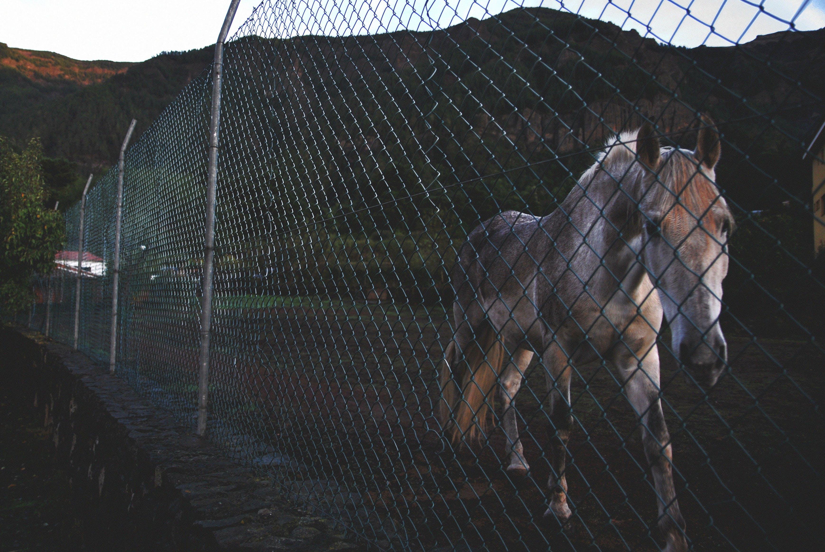 Immagine gratuita di acciaio, animale, azienda agricola, cavallo