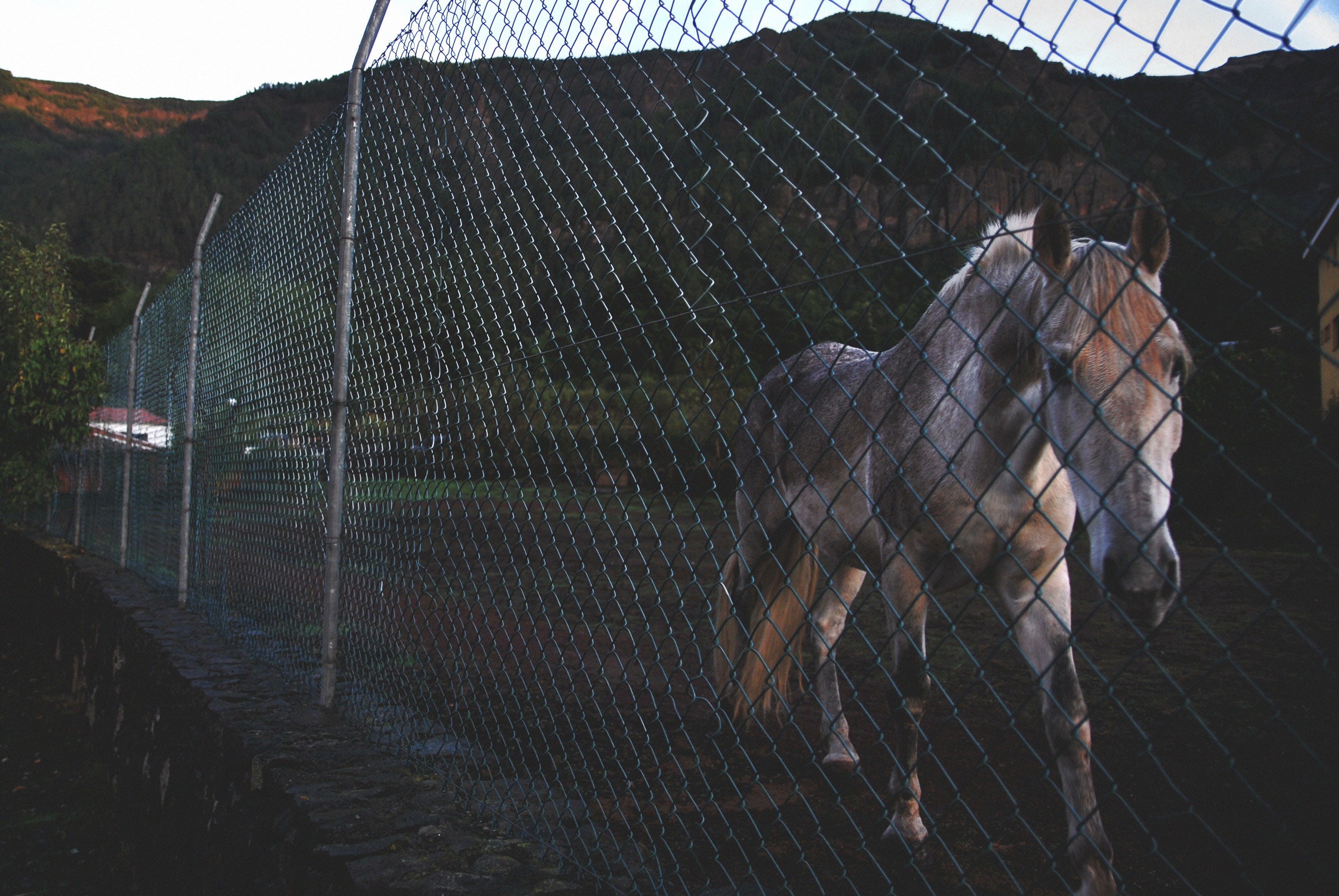 Photo of White and Brown Horse Beside Green Stainless Steel Fence Near Green Mountain