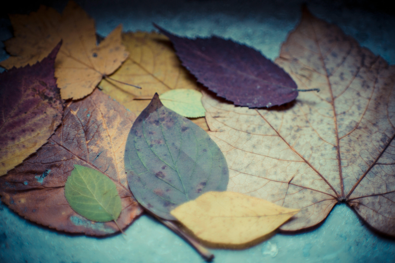Varieties of Leaves on Gray Surface