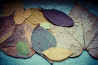 nature, texture, blur