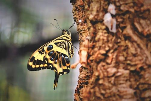 Gratis arkivbilde med insekt, sommerfugl, svalestjert
