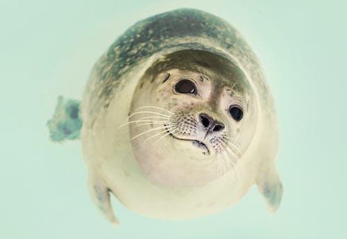 Foto profissional grátis de animal, Antártica, antártico, ártico