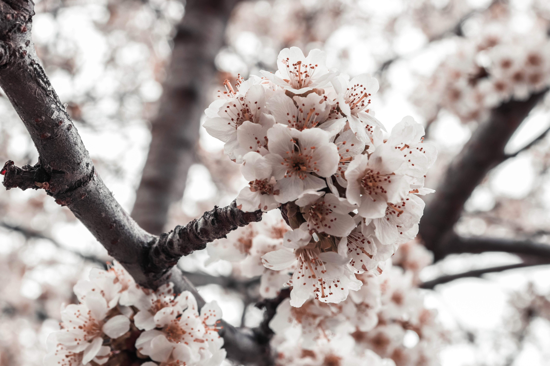 Základová fotografie zdarma na téma den, krásné květiny, květiny, strom