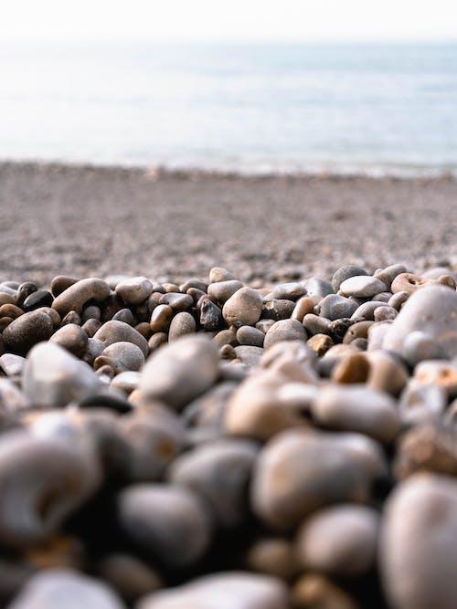 คลังภาพถ่ายฟรี ของ ก้อนกรวด, ความชัดลึก, ชายหาด, มุ่งเน้น