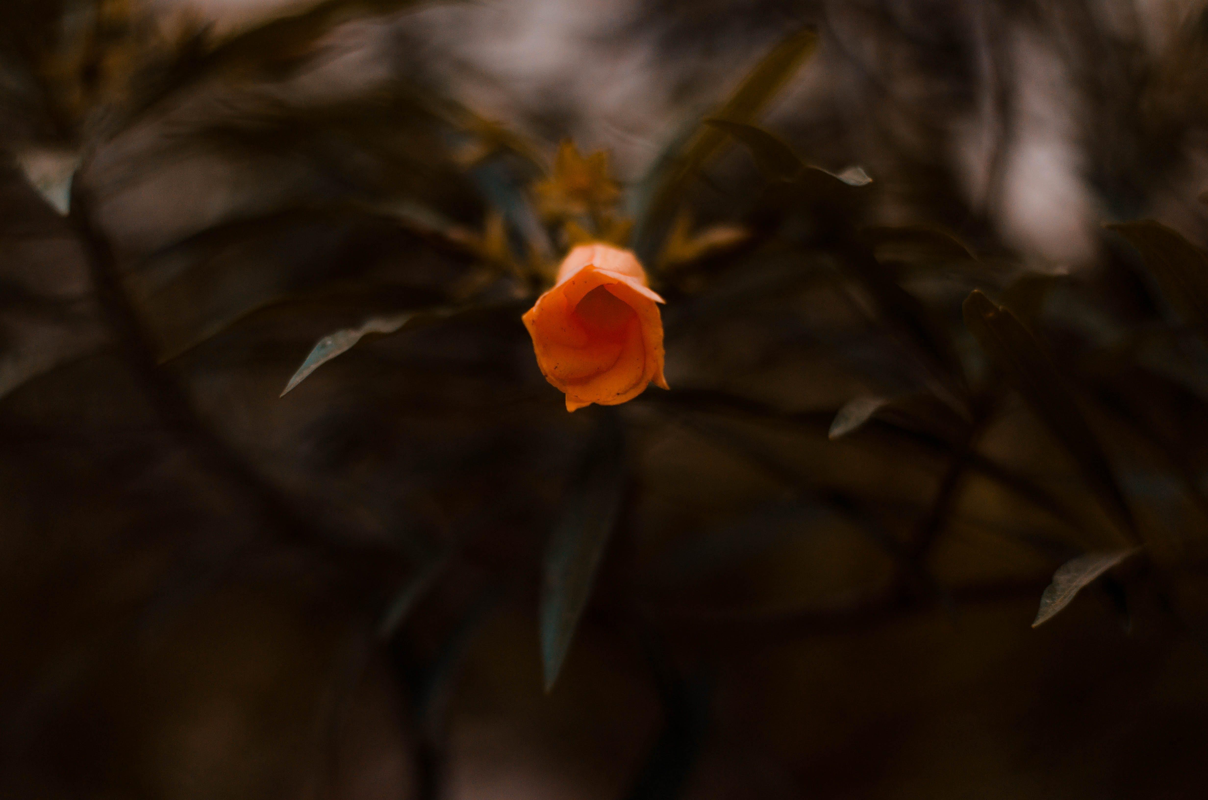 Δωρεάν στοκ φωτογραφιών με άνοιξη, ανοιξιάτικο λουλούδι, ιαματική πηγή, λουλούδι