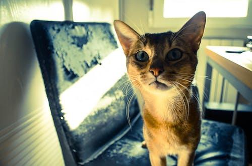 Foto profissional grátis de amigo, animal de estimação, gato, retrato
