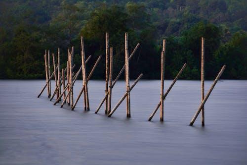 Foto stok gratis #air, alam, memancing, paparan panjang