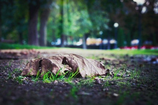 Selective Photo of Dry Leaf on Ground