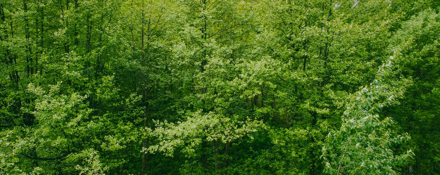 green trees free stock photo