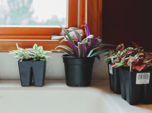 Ingyenes stockfotó asztal, belsőépítészet, beltéri, beltéri növények témában