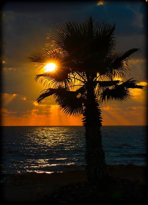 Free stock photo of dark, sea, sunset, tree