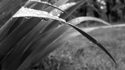 Gratis arkivbilde med gress, irisblad, oppkjørsel, overskyet