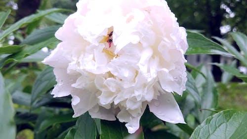 Gratis arkivbilde med blader, blomst, gress, maur