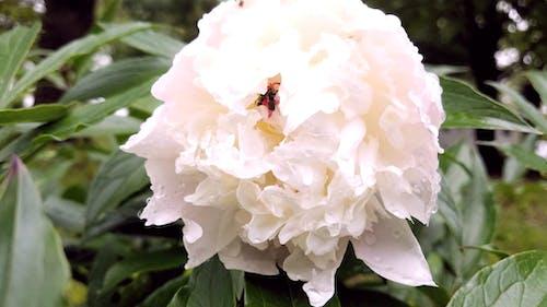 Gratis arkivbilde med blomst, gress, hvit blomst, maur