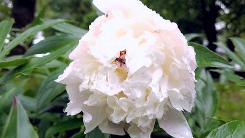 Gratis arkivbilde med blomst, blomst blader, gress, hvit blomst