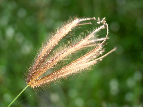 Selective Focus Photo of Brown Grass