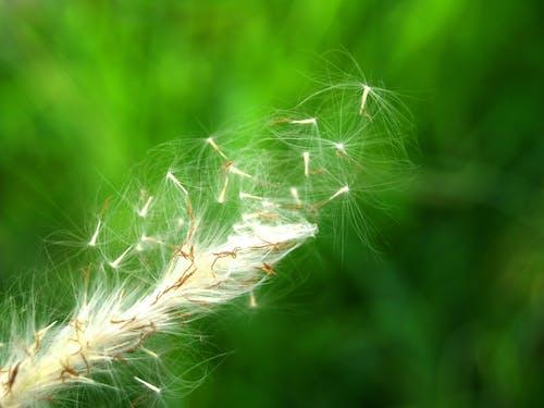 三葉草, 乾的, 光, 光線 的 免費圖庫相片