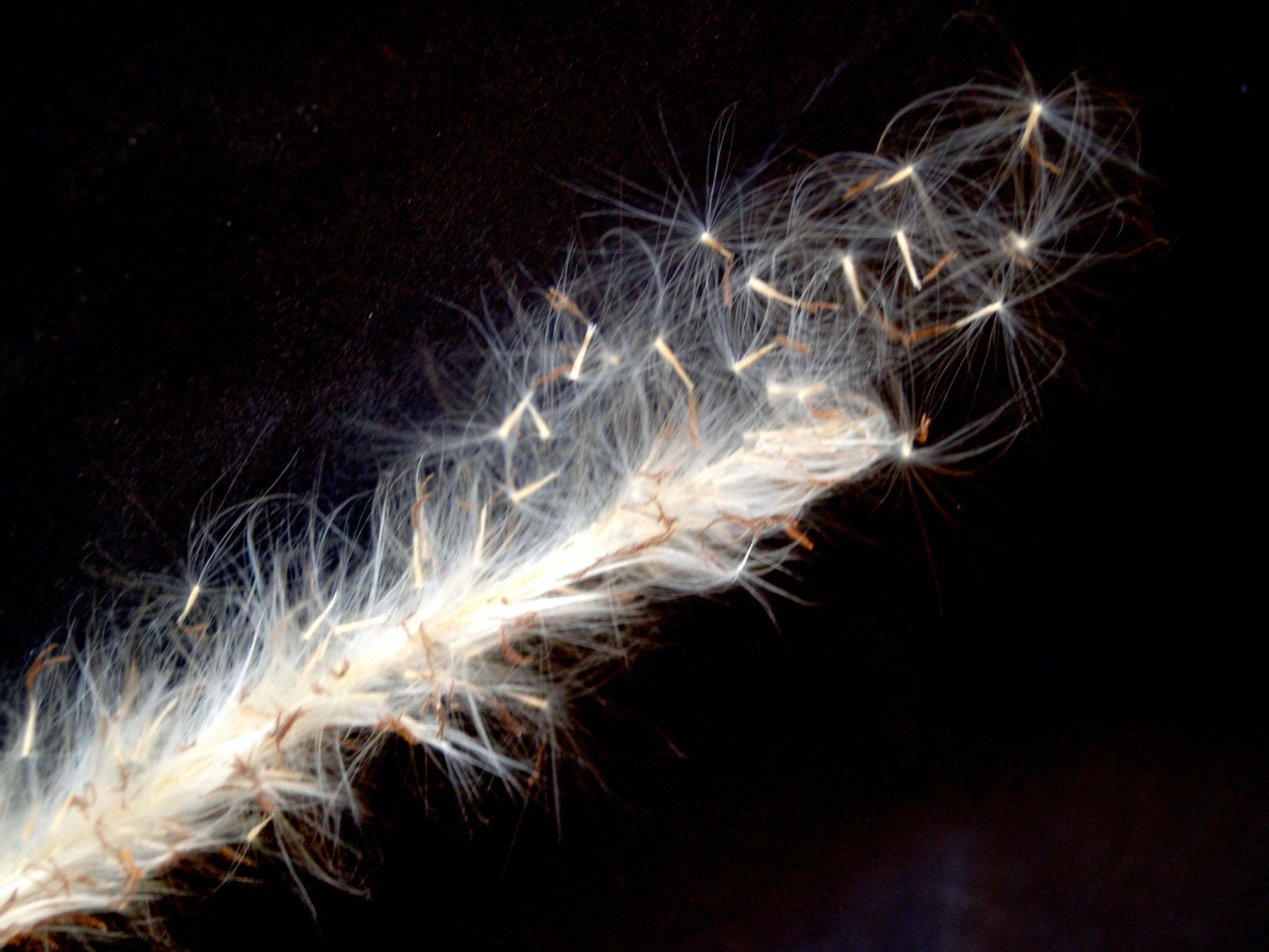 White Feather Close-up Photography