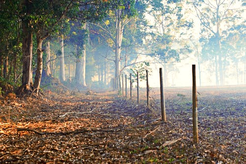 Gratis lagerfoto af blå blæse fra eukalyptus, bush trail, busk, efterårsblade