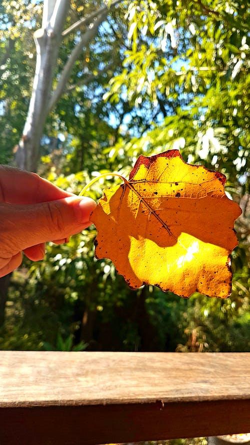 Gratis lagerfoto af bokeh, efterårsblad, efterårsstemning, gyldne blade