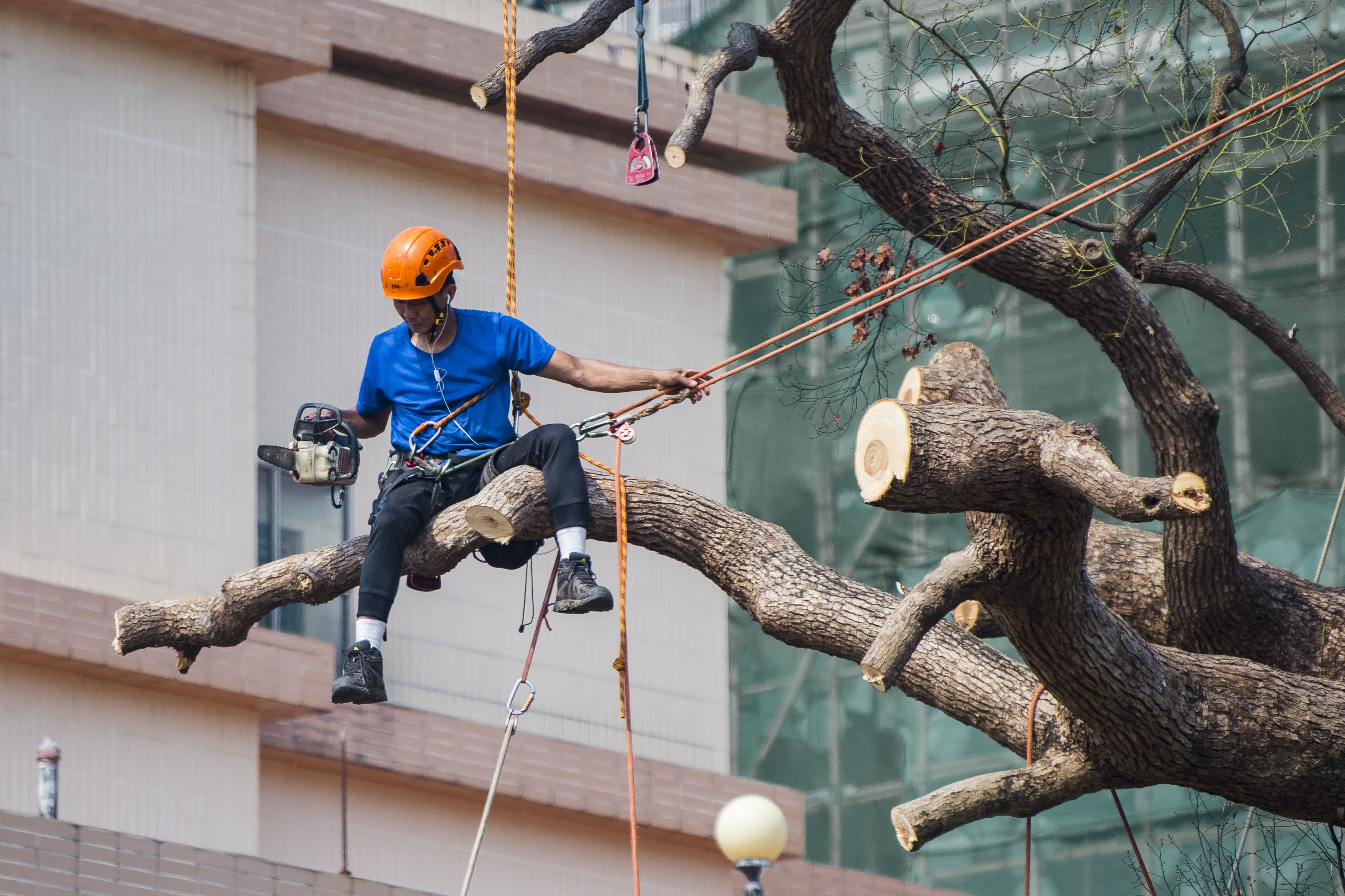 Man in Blue Shirt Siting on Tree Branch Wearing Safety Harness Holding Ropes on Left Hand and Chainsaw in Right Hand