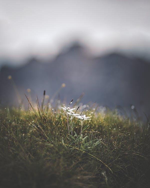 alpejski, flora, krajobraz