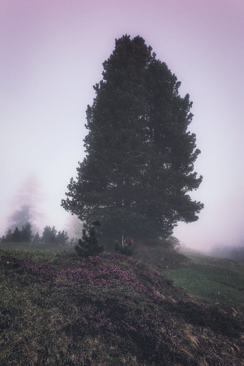 Green Trees in Foggy Surrounding