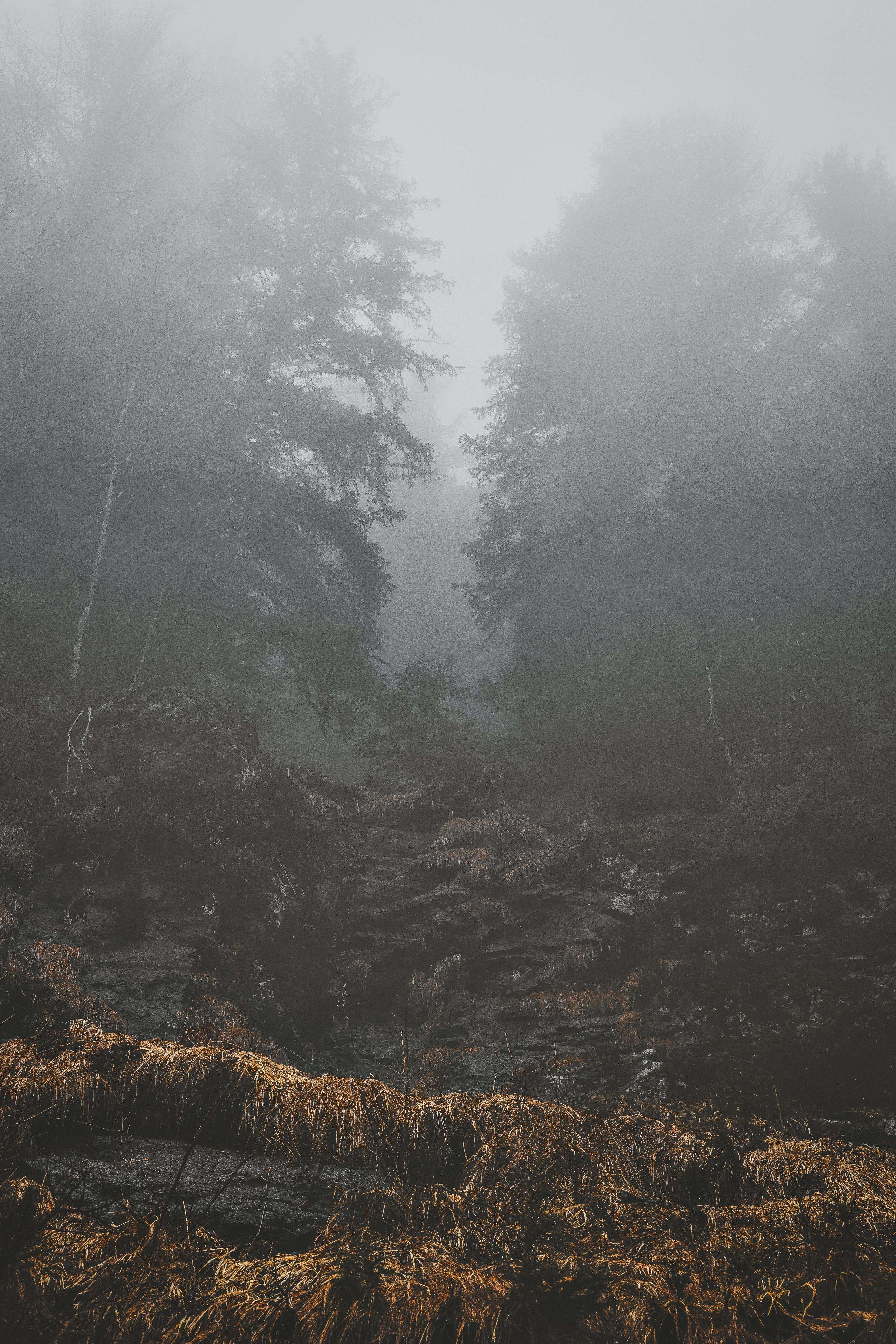 HD wallpaper с HD-обои, бревно, гора, деревья