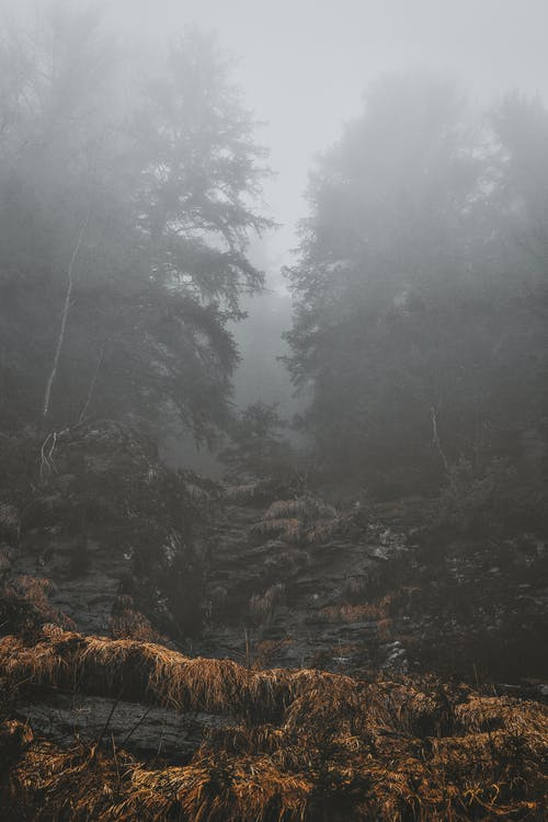 Trees during Foggy Morning